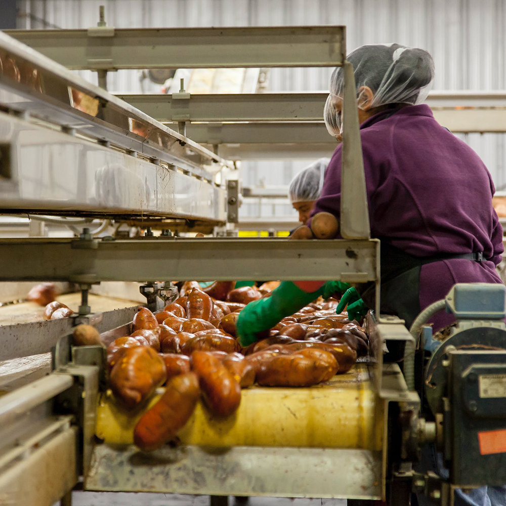 Food Processing Operations